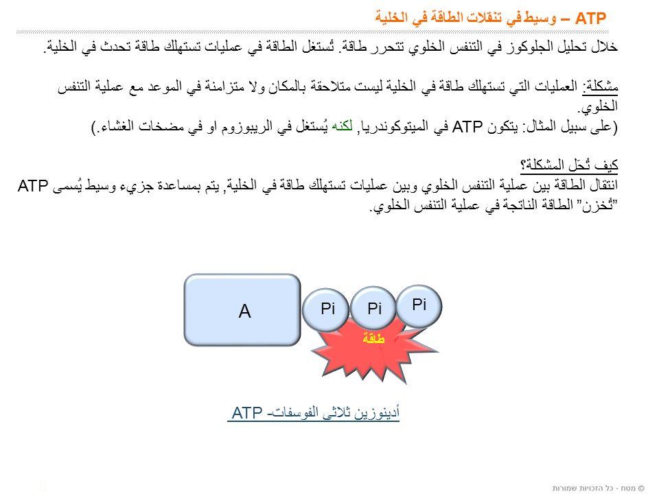 8 ATP – وسيط في تنقلات الطاقة في الخلية A Pi أدينوزين ثلاثي الفوسفات ATP - طاقة خلال تحليل الجلوكوز في التنفس الخلوي تتحرر طاقة.