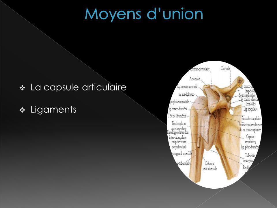 La capsule articulaire Ligaments