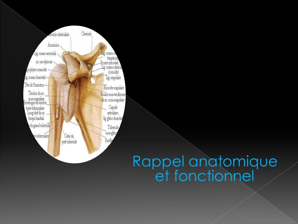 Rappel anatomique et fonctionnel