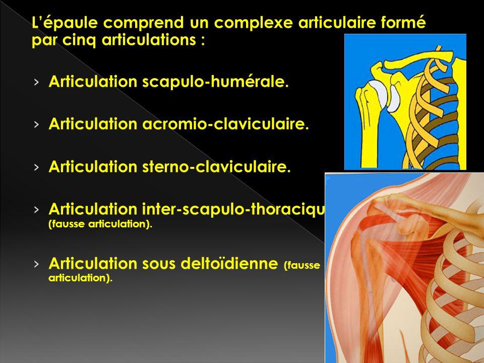 Articulation scapulo-humérale. Articulation acromio-claviculaire. Articulation sterno-claviculaire. Articulation inter-scapulo-thoracique (fausse arti