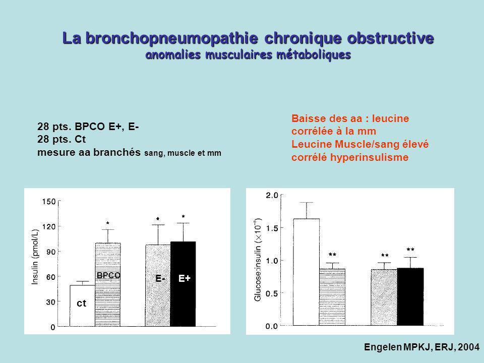 La bronchopneumopathie chronique obstructive anomalies musculaires métaboliques Engelen MPKJ, ERJ, 2004 ct BPCO E-E+ 28 pts. BPCO E+, E- 28 pts. Ct me