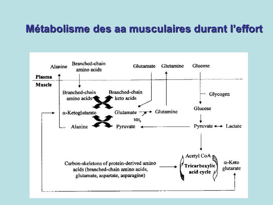 Métabolisme des aa musculaires durant leffort