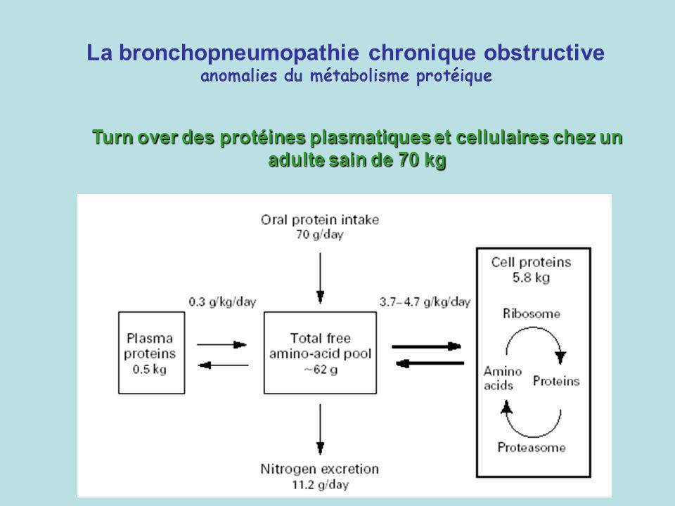 Turn over des protéines plasmatiques et cellulaires chez un adulte sain de 70 kg La bronchopneumopathie chronique obstructive anomalies du métabolisme