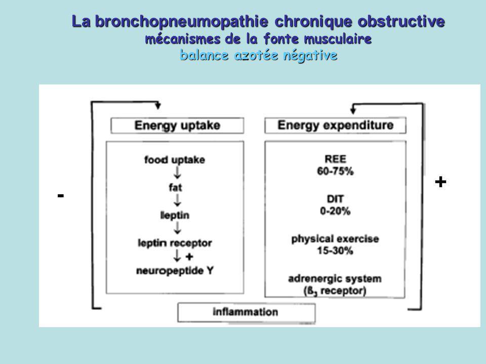 La bronchopneumopathie chronique obstructive mécanismes de la fonte musculaire balance azotée négative + -