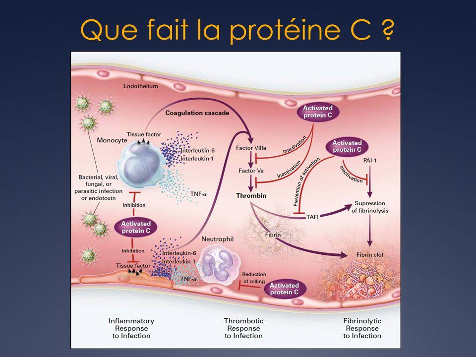 Que fait la protéine C