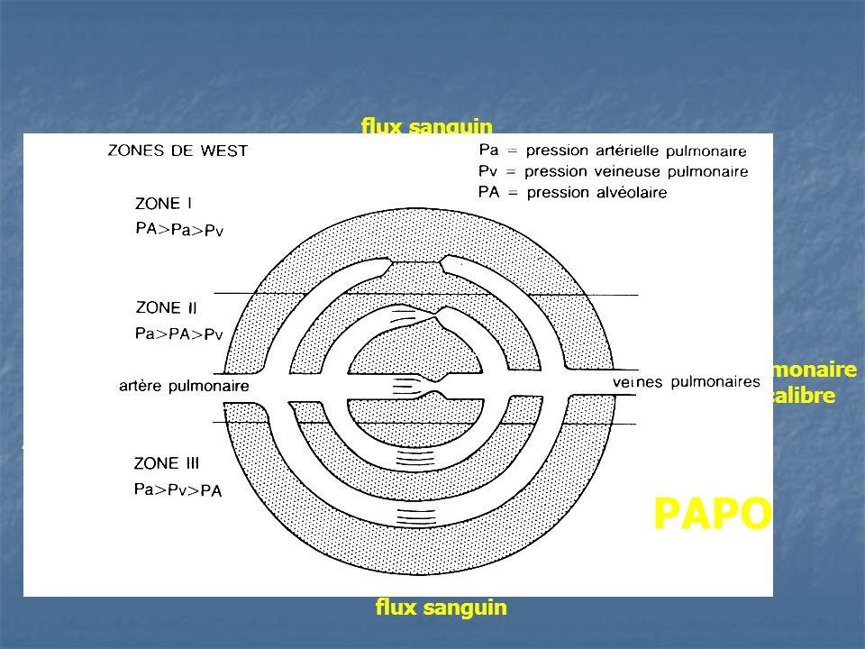 flux sanguin gonflage du ballonnet interruption du flux dans un secteur dépendant dune artère pulmonaire de gros calibre OG CAP veine pulmonaire de gr