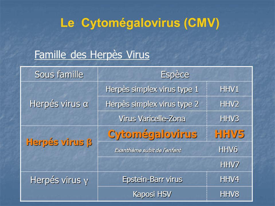 Le Cytomégalovirus (CMV) Sous famille Espèce Herpés virus α Herpès simplex virus type 1 HHV1 Herpès simplex virus type 2 HHV2 Virus Varicelle-Zona HHV3 Herpés virus β CytomégalovirusHHV5 Exanthème subit de lenfant HHV6 Exanthème subit de lenfant HHV6 HHV7 HHV7 Herpés virus γ Epstein-Barr virus HHV4 Kaposi HSV HHV8 Famille des Herpès Virus