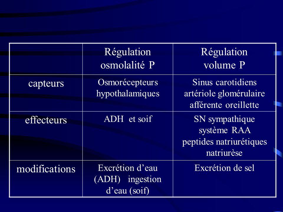 Régulation osmolalité P Régulation volume P capteurs Osmorécepteurs hypothalamiques Sinus carotidiens artériole glomérulaire afférente oreillette effecteurs ADH et soifSN sympathique système RAA peptides natriurétiques natriurèse modifications Excrétion deau (ADH) ingestion deau (soif) Excrétion de sel