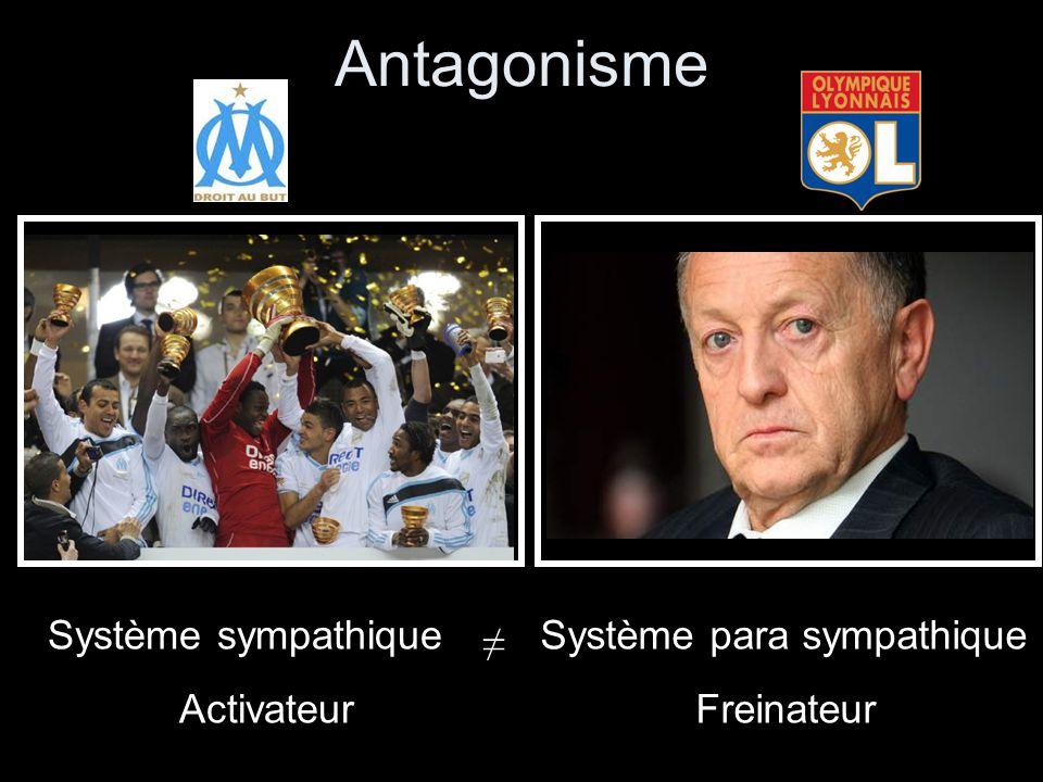Antagonisme Système sympathique Activateur Système para sympathique Freinateur