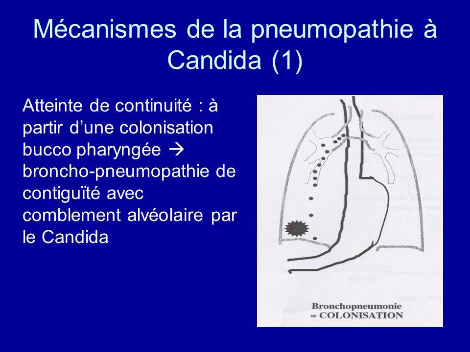 Conclusion Oui, la pneumopathie à Candida chez le patient ventilé, non immunodéprimé existe Il sagit alors dune localisation secondaire dune candidémie, ou rarement de la constitution dune pneumopathie vraie à partir dune colonisation de larbre trachéobronchique Lincidence de ces pneumopathies à Candida devrait augmenter (augmentation de lincidence globale des candidémies nosocomiales = + 370 à 418 % dans les années 1980 aux USA NISS, Am J Med 1991 )