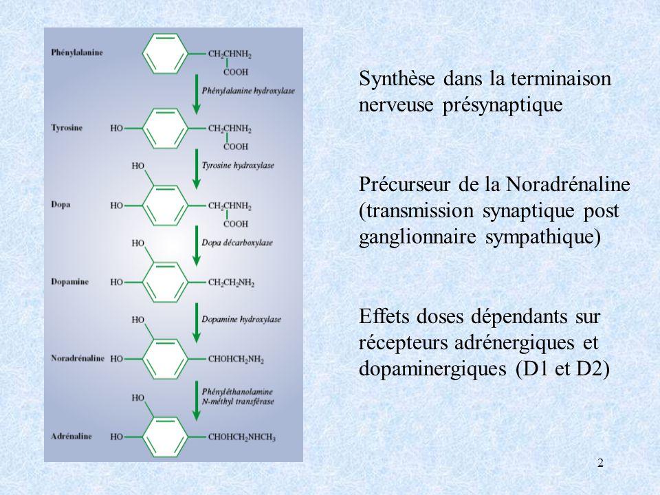 2 Synthèse dans la terminaison nerveuse présynaptique Précurseur de la Noradrénaline (transmission synaptique post ganglionnaire sympathique) Effets doses dépendants sur récepteurs adrénergiques et dopaminergiques (D1 et D2)
