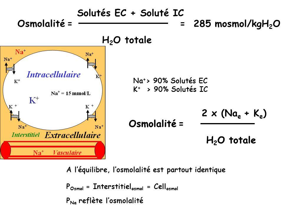 Osmolalité Na e + K e = H 2 O totale Osmolalité Solutés EC + Soluté IC = H 2 O totale = 285 mosmol/kgH 2 O Na + > 90% Solutés EC K + > 90% Solutés IC