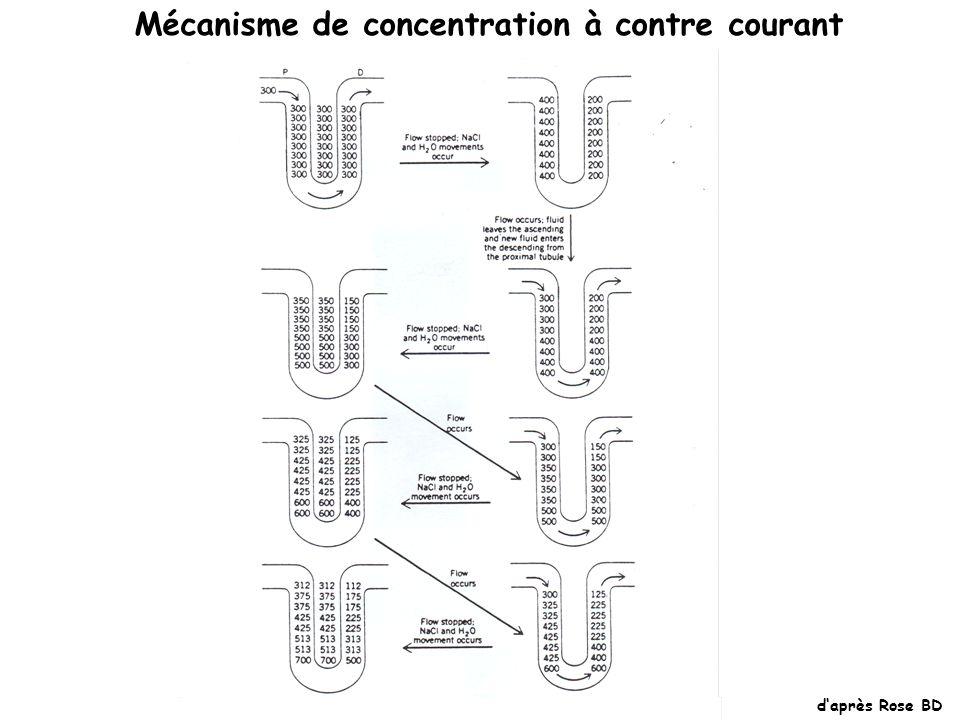 Mécanisme de concentration à contre courant daprès Rose BD