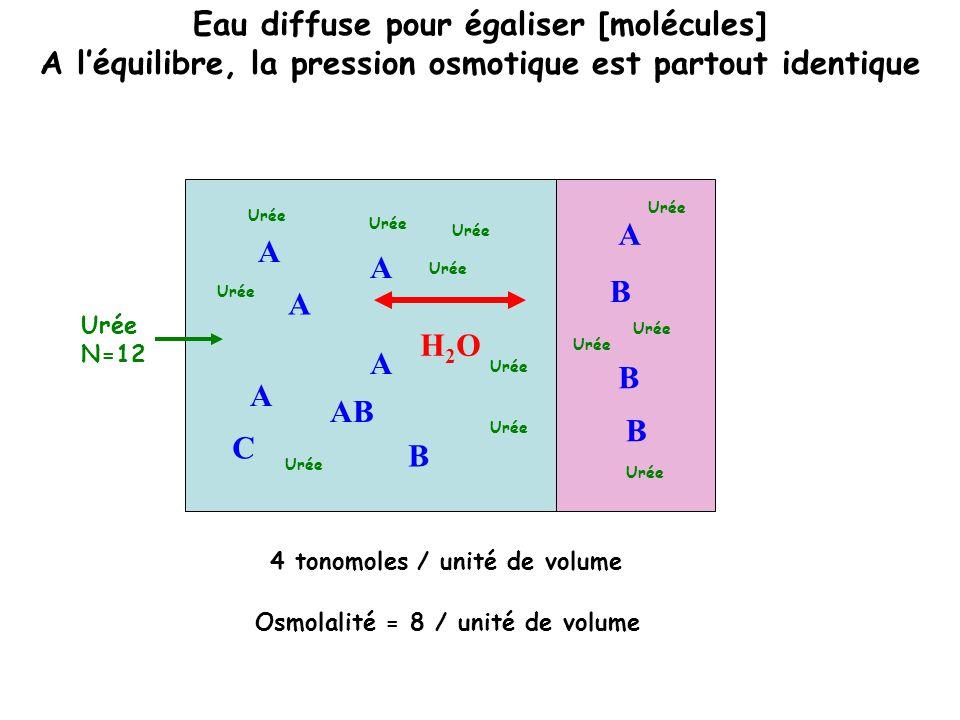Idem avec triglycérides, mannitol, éthanol, méthanol, éthylène glycol… Isotonic hyponatremia