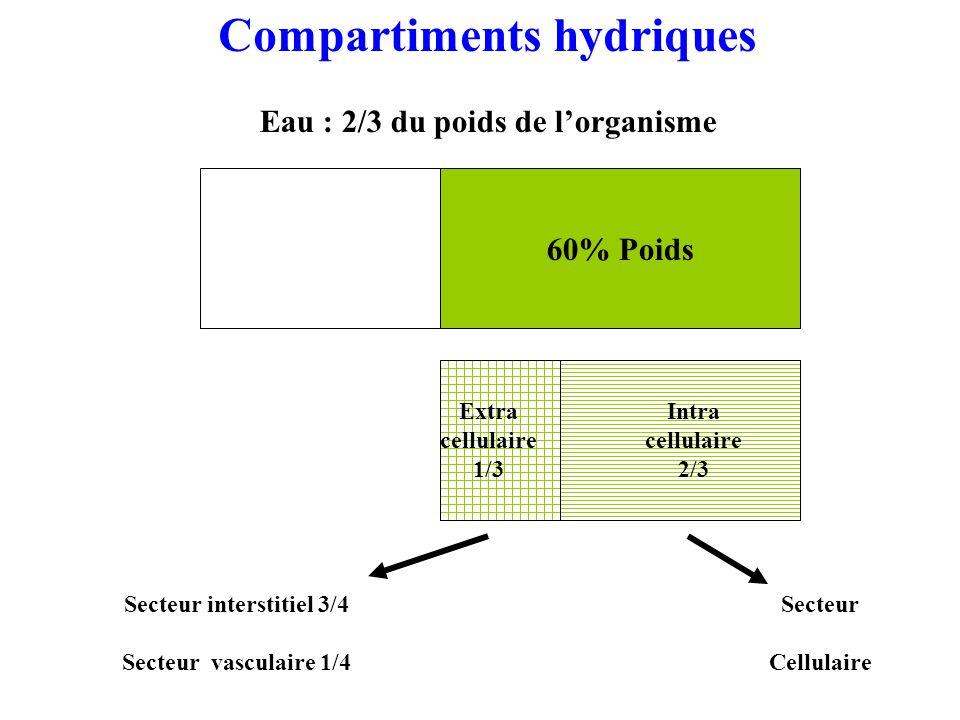 60% Poids Extra cellulaire 1/3 Intra cellulaire 2/3 Secteur interstitiel 3/4 Secteur vasculaire 1/4 Secteur Cellulaire Compartiments hydriques Eau : 2