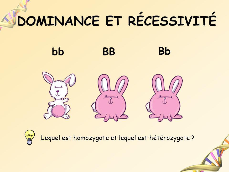 DOMINANCE ET RÉCESSIVITÉ bbBB Bb Lequel est homozygote et lequel est hétérozygote ?