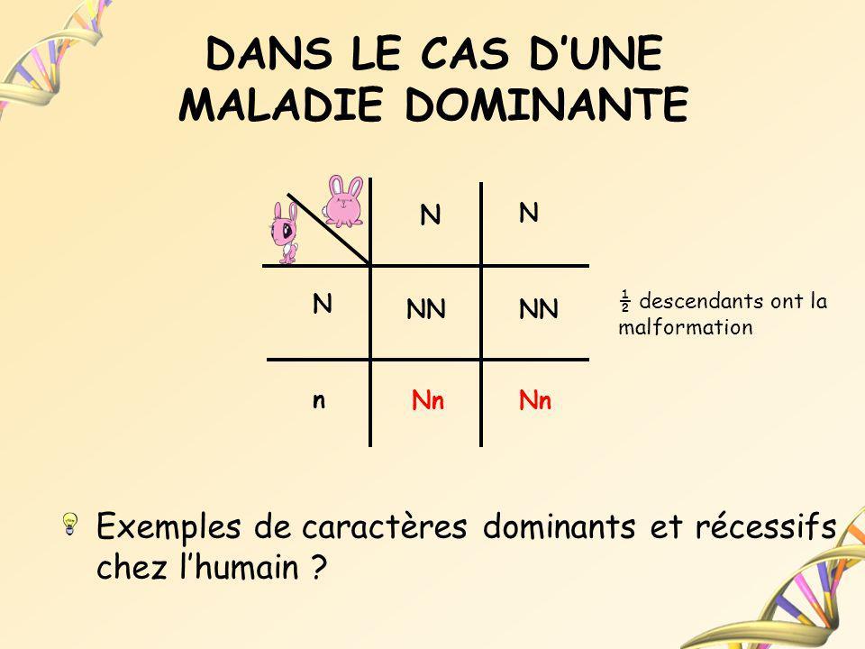 DANS LE CAS DUNE MALADIE DOMINANTE Exemples de caractères dominants et récessifs chez lhumain ? N N N n NN Nn ½ descendants ont la malformation