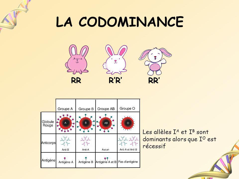 LA CODOMINANCE RR Les allèles I A et I B sont dominants alors que I O est récessif