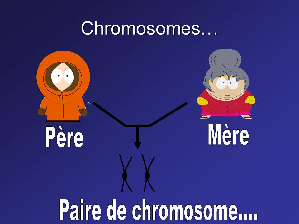 Chromosomes…(suite) Humain 42 chromosomes (2 X 23) Canne à sucre > 100 Bactérie 1 ou 2 chromosomes