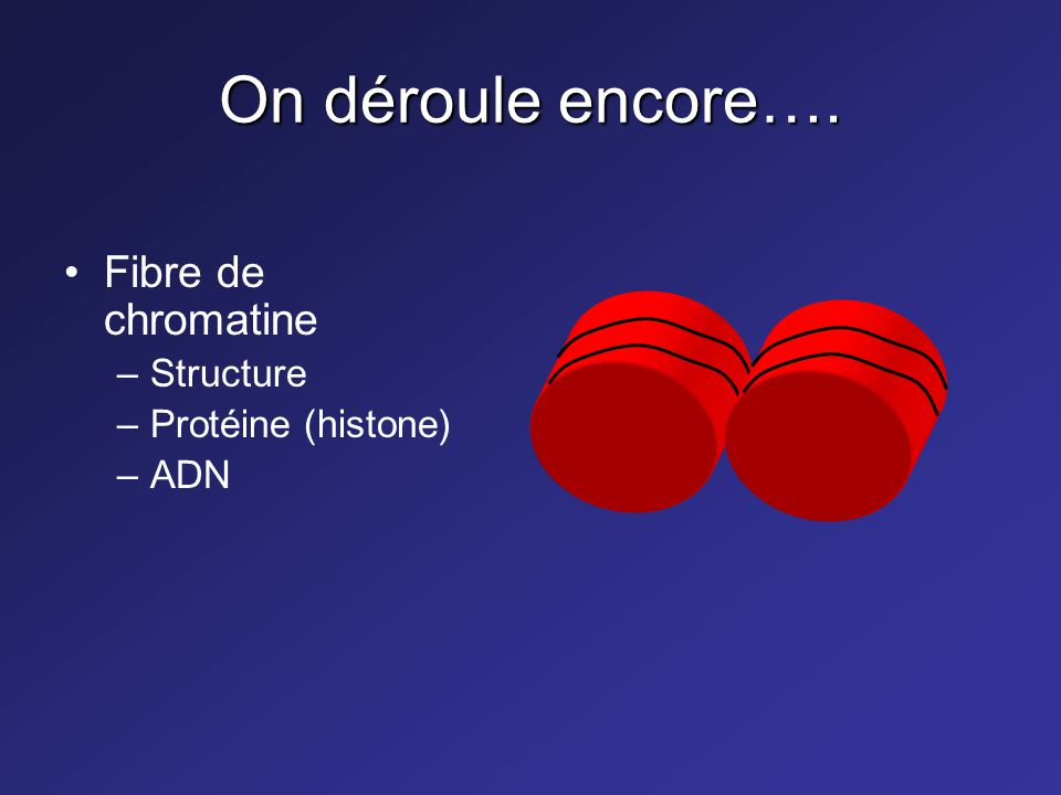 On déroule encore…. Fibre de chromatine –Structure –Protéine (histone) –ADN