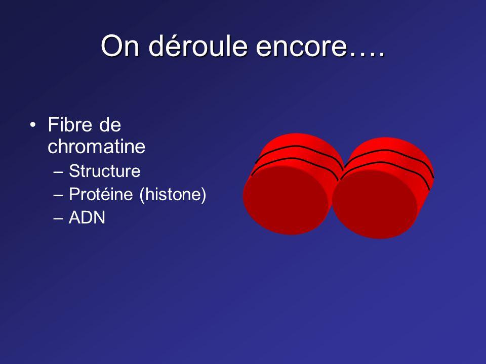 On déroule toujours…. Structure en hélice –Deux brins –Sillon majeur et mineur –Cœur hydrophobe