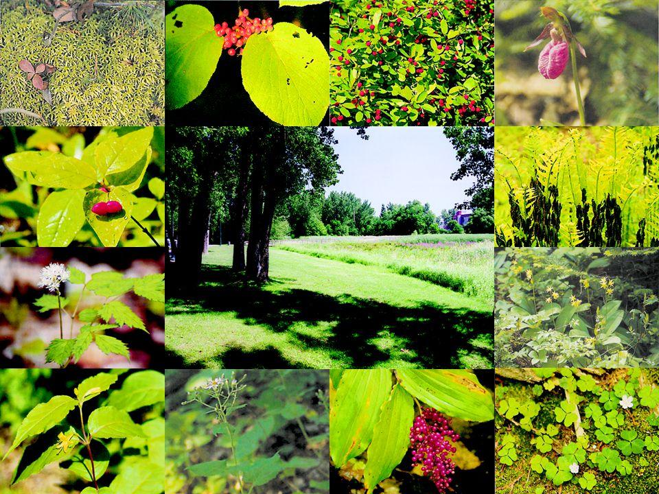 Combien despèces de plantes pouvez-vous nommer ? ?