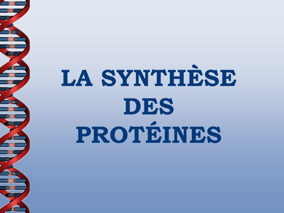 CE QUE NOUS AVONS APPRIS Nucléotides - Adénine (A) - Thymine (T) - Guanine (G) - Cytosine (C) - Uracile (U) Mitose Méïose Adénine (ADN/ARN) Guanine (ADN/ARN) Thymine (ADN/ARN) Cytosine (ADN/ARN) Uracile (ARN) http://www.snv.jussieu.fr/bmedia/racine/04-mitose.htm
