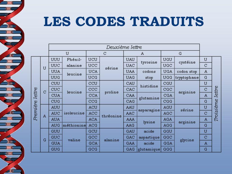 LES CODES TRADUITS