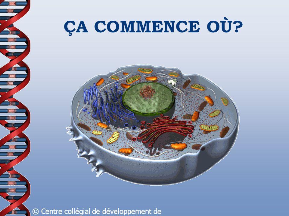 ÇA COMMENCE OÙ? © Centre collégial de développement de matériel didactique, 2008