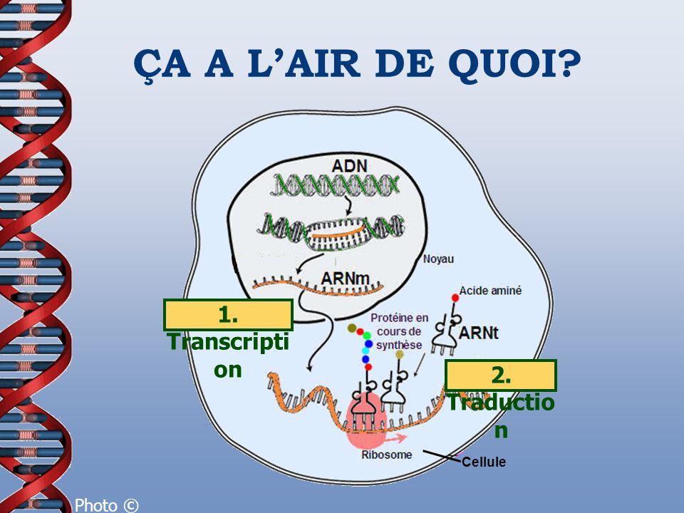 ÇA A LAIR DE QUOI? 1. Transcripti on 2. Traductio n Photo © L'internaute Cellule
