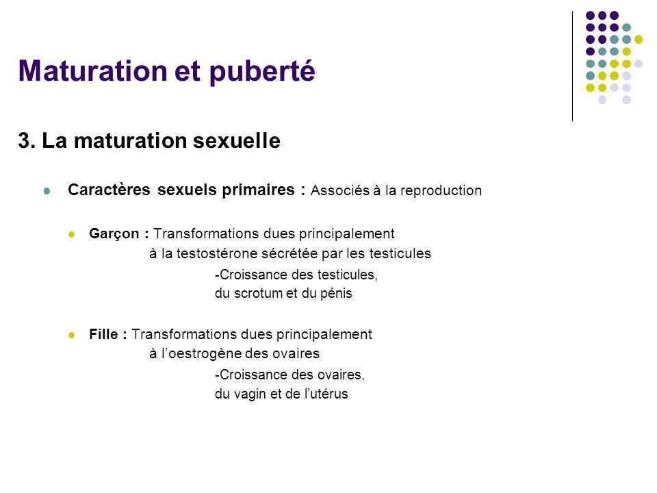 3. La maturation sexuelle Caractères sexuels primaires : Associés à la reproduction Garçon : Transformations dues principalement à la testostérone séc