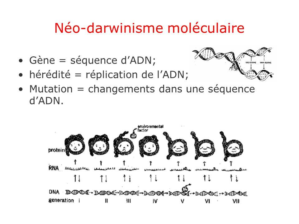 Néo-darwinisme moléculaire Gène = séquence dADN; hérédité = réplication de lADN; Mutation = changements dans une séquence dADN.