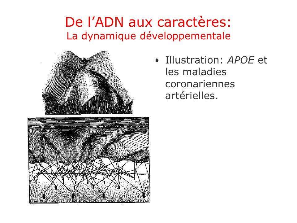 De lADN aux caractères: La dynamique développementale Illustration: APOE et les maladies coronariennes artérielles.