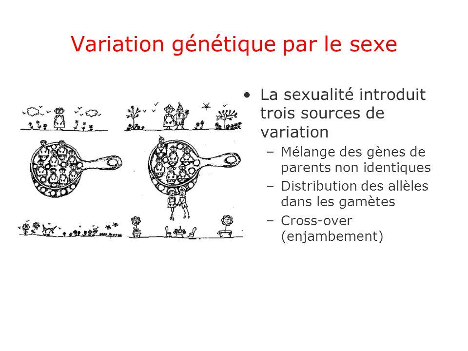 Variation génétique par le sexe La sexualité introduit trois sources de variation –Mélange des gènes de parents non identiques –Distribution des allèles dans les gamètes –Cross-over (enjambement)