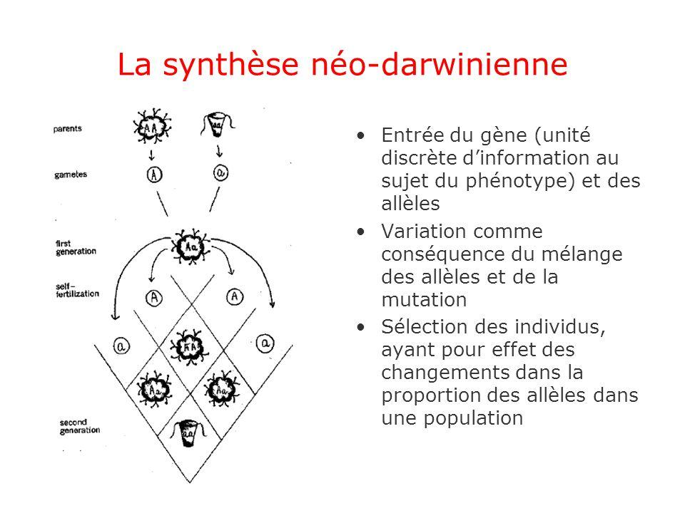 La synthèse néo-darwinienne Entrée du gène (unité discrète dinformation au sujet du phénotype) et des allèles Variation comme conséquence du mélange d