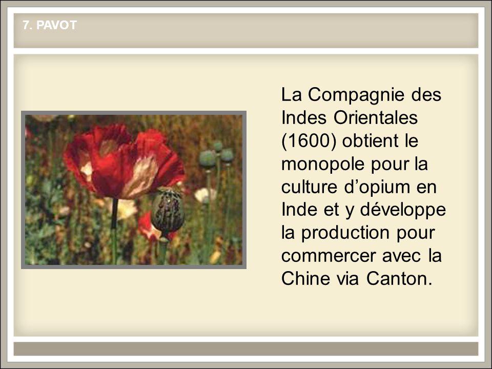 La Compagnie des Indes Orientales (1600) obtient le monopole pour la culture dopium en Inde et y développe la production pour commercer avec la Chine via Canton.