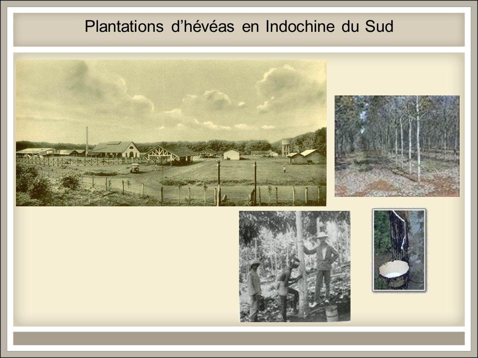 Plantations dhévéas en Indochine du Sud