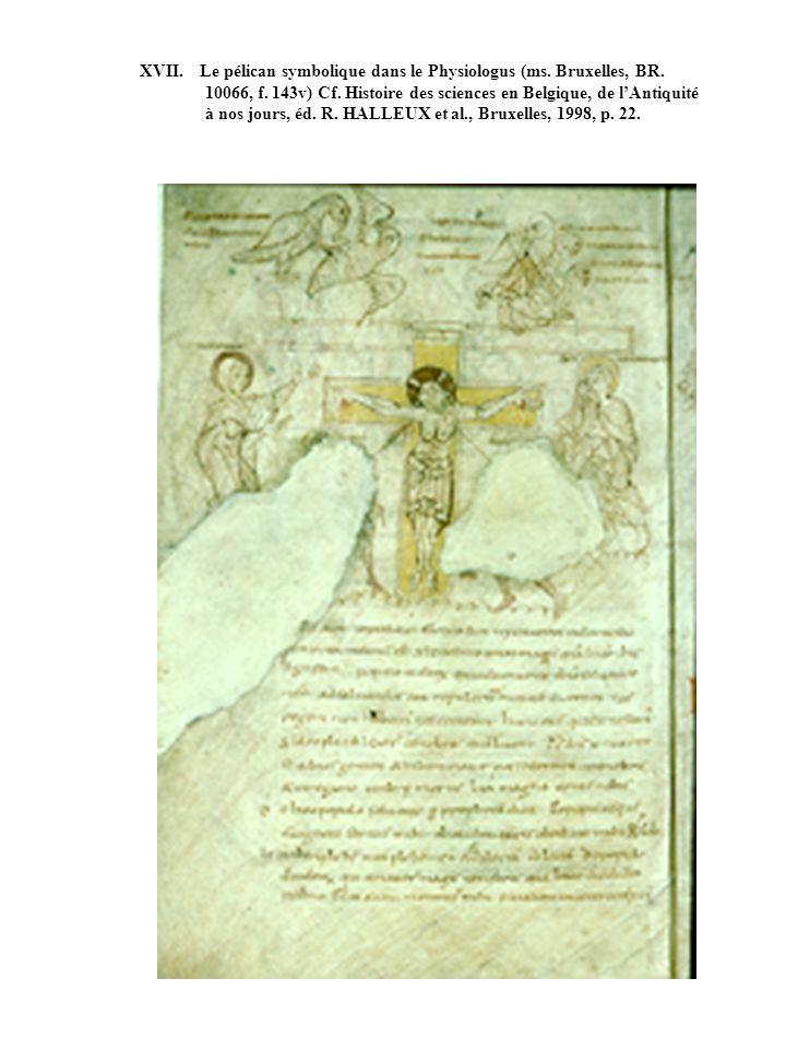 XVII. Le pélican symbolique dans le Physiologus (ms. Bruxelles, BR. 10066, f. 143v) Cf. Histoire des sciences en Belgique, de lAntiquité à nos jours,