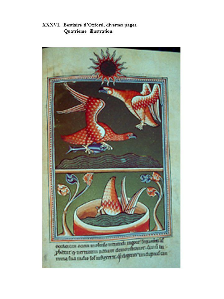 XXXVI. Bestiaire dOxford, diverses pages. Quatrième illustration.