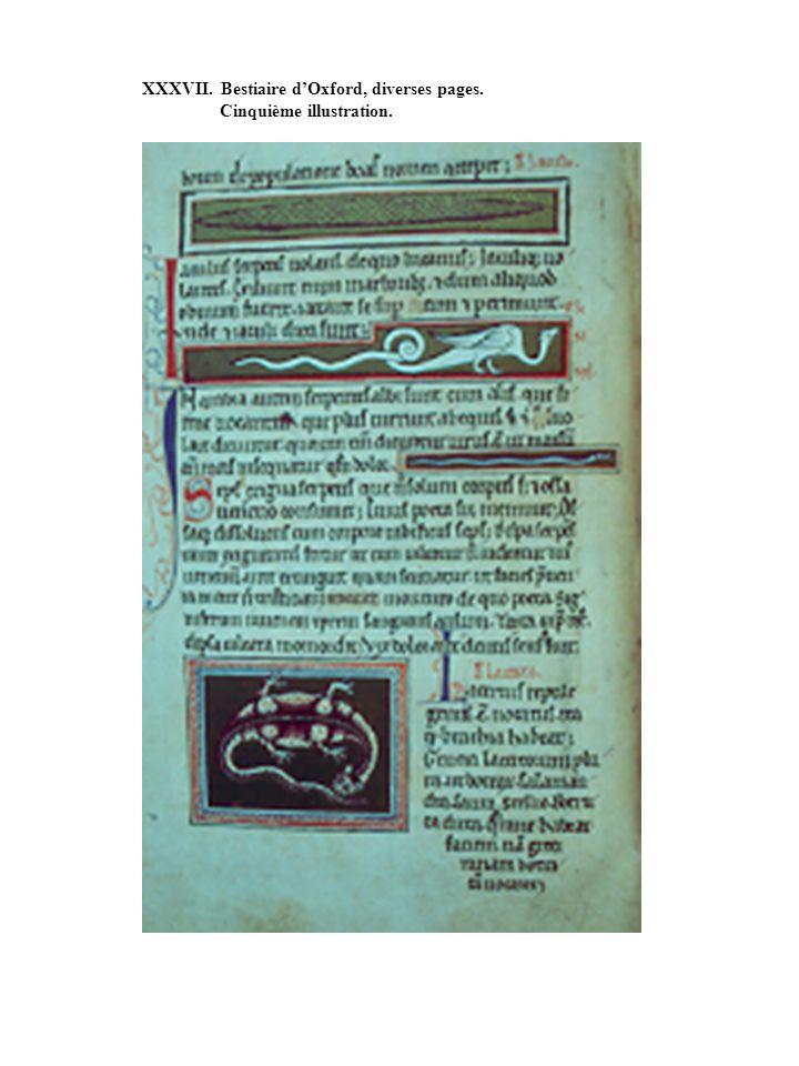 XXXVII. Bestiaire dOxford, diverses pages. Cinquième illustration.