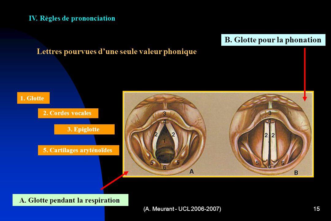 (A. Meurant - UCL 2006-2007)15 Lettres pourvues dune seule valeur phonique A. Glotte pendant la respiration B. Glotte pour la phonation 1. Glotte 2. C