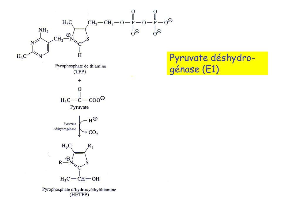 Pyruvate déshydro- génase (E1)