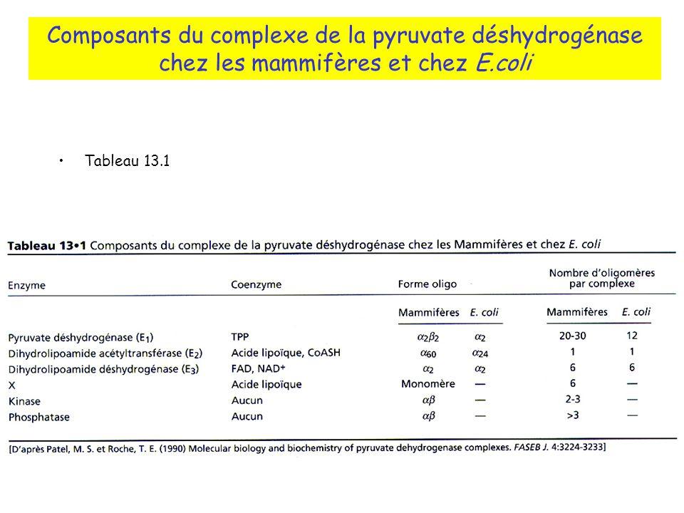 Composants du complexe de la pyruvate déshydrogénase chez les mammifères et chez E.coli Tableau 13.1