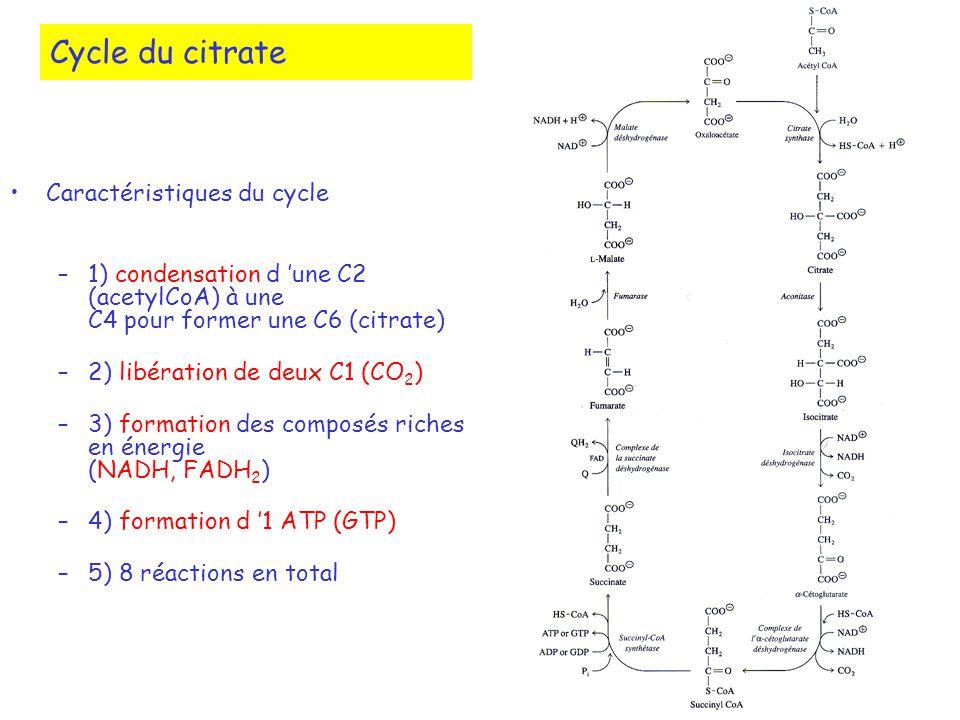 Cycle du citrate Caractéristiques du cycle –1) condensation d une C2 (acetylCoA) à une C4 pour former une C6 (citrate) –2) libération de deux C1 (CO 2 ) –3) formation des composés riches en énergie (NADH, FADH 2 ) –4) formation d 1 ATP (GTP) –5) 8 réactions en total
