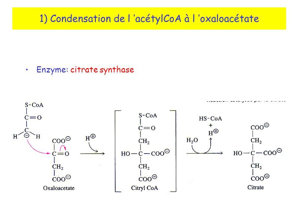 1) Condensation de l acétylCoA à l oxaloacétate Enzyme: citrate synthase