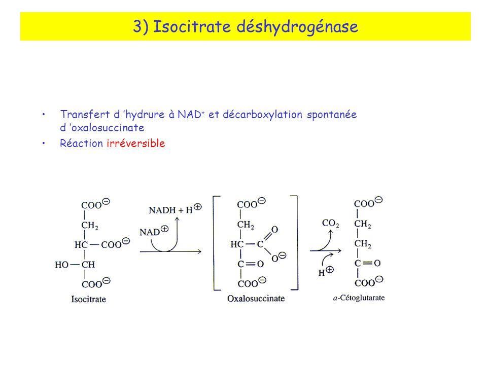 3) Isocitrate déshydrogénase Transfert d hydrure à NAD + et décarboxylation spontanée d oxalosuccinate Réaction irréversible