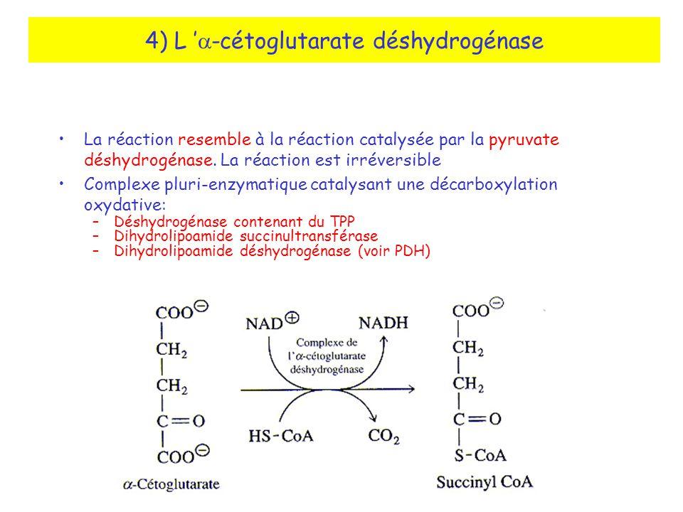 4) L -cétoglutarate déshydrogénase La réaction resemble à la réaction catalysée par la pyruvate déshydrogénase.