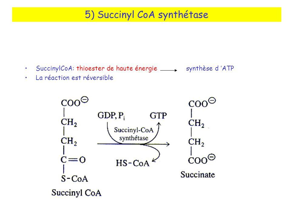 5) Succinyl CoA synthétase SuccinylCoA: thioester de haute énergie synthèse d ATP La réaction est réversible