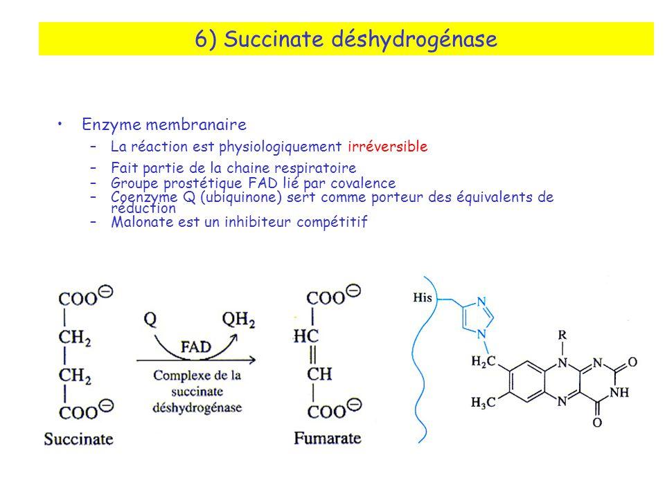 6) Succinate déshydrogénase Enzyme membranaire –La réaction est physiologiquement irréversible –Fait partie de la chaine respiratoire –Groupe prostétique FAD lié par covalence –Coenzyme Q (ubiquinone) sert comme porteur des équivalents de réduction –Malonate est un inhibiteur compétitif