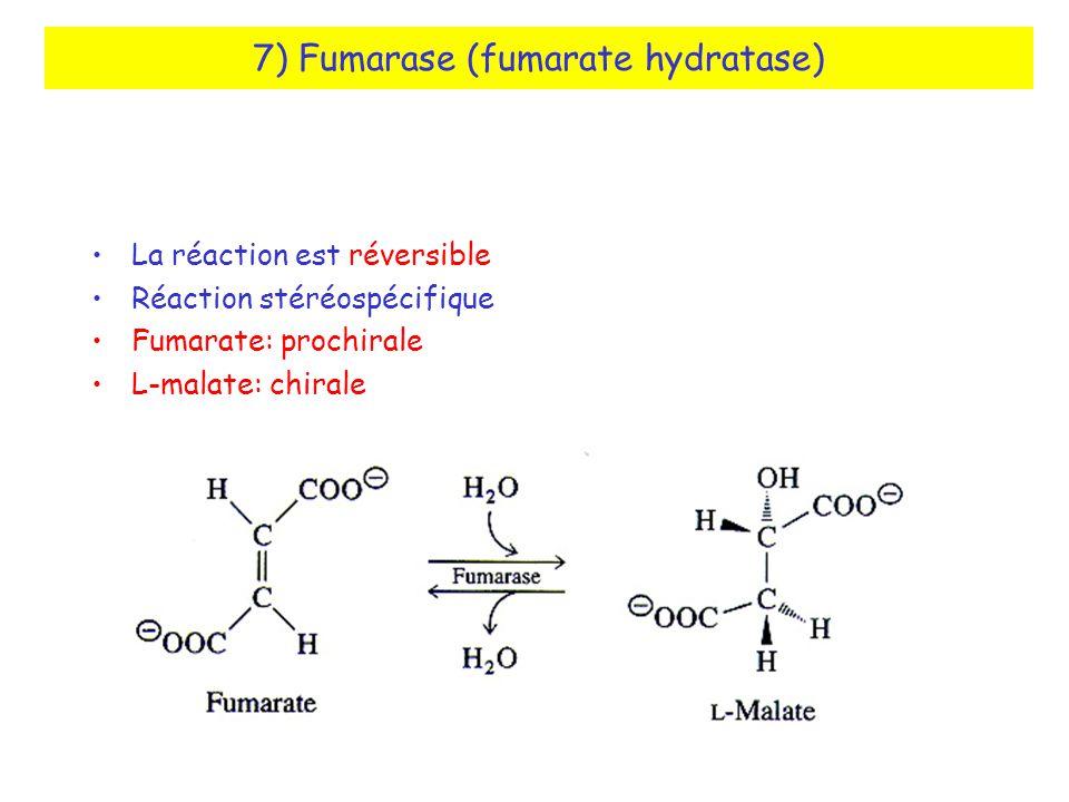 7) Fumarase (fumarate hydratase) La réaction est réversible Réaction stéréospécifique Fumarate: prochirale L-malate: chirale